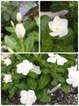 心落ち着くお花たち