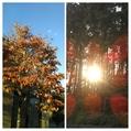今朝の散歩 里山の秋