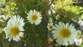 可愛いお花が咲いていました(^_-)-☆