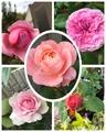 ピンクの花がイロイロと