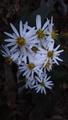 森の家の花💮