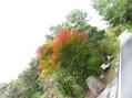 秋の散歩道[i:236]