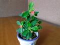 投げ売り植物を育てる