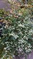 ふくおかルーバルガーデン2~秋の庭便り🍁糸すすきに穂がたちました🌾