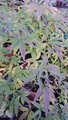 ふくおかルーバルガーデン2~秋の庭便り🍁ニンジンボクの花💠にシジミチヨウが休憩。
