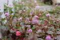 ペンタス&秋の花々
