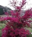 赤い花咲く
