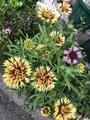 今朝の色々なお花🎵