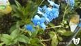 庭のお花と多肉のお花(^_-)-☆