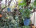 新しい鉢へ植え替え(その2)