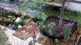 昨日 花菜ガーデンに行ったのですが