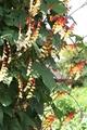ミナ・ロバータの種子が…
