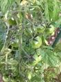 アクラとトマト