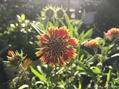 咲く花 朝陽を浴びる