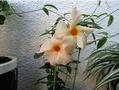 🌻今日の花たち🌻その20
