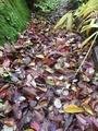 秋色に染まってます