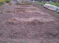 畑の改造 一日目