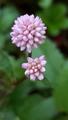 ふくおかルーバルガーデン2~秋の庭便り🍁四季の移り変わりを楽しんで🎵