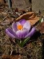 散歩中のお花たち[i:232]とか。