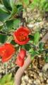出来立て花壇の秋景色~😊~