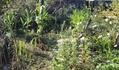 庭の模様替え