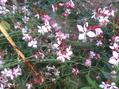 草花も染まり