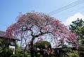 良い天気でお花がきれい[i:136]