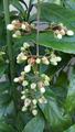 ふくおかルーバルガーデン2~秋の庭便り🍁やっとクラリンドウの開花がちかずいて💠