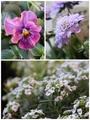 待機中の花と葉と‥