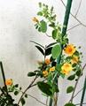 冬の住まいで咲く花