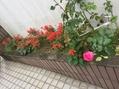 花壇を冬仕様に