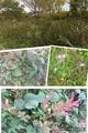 野の花、まだ咲いている花、畑の作業など