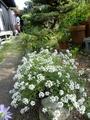 今日の庭・・・