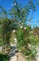 今日の花フェスタ公園