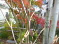 赤や黄色の色さまざまに うっとり紅葉