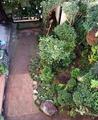恵み雨後の庭先