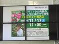 小山内先生のバラセミナー