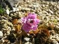 次々と咲く花 1