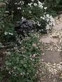 こぼれっ子ばかりの庭