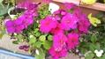 今日は種蒔きしました。(*´▽`*)