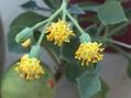 庭の花〜色々