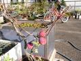 盆栽のリンゴ3点