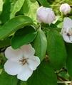 樹木の花、次々と・・