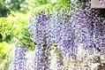 藤沢市役所で花の展示が😃