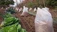 畑の土壌改良⁉️