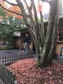 京風の庭園 一条恵観山荘