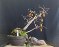 秋の風情は『老爺柿』で楽しもう!02