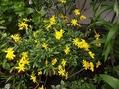 雨の後の庭の花✿
