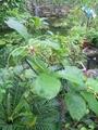 不思議な花…新潟県立植物園