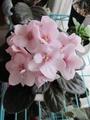 続々と開花
